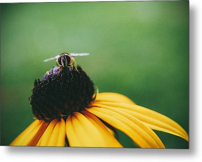 Face Of A Bee Metal Print by Tracy  Jade