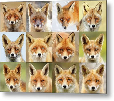 Faces Of Foxes Metal Print by Roeselien Raimond