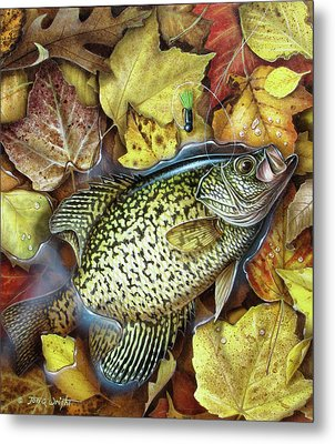 Fall Crappie Metal Print by JQ Licensing