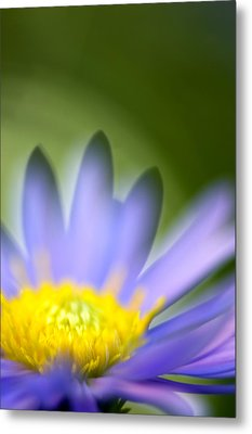 Fall Flower Metal Print by Silke Magino
