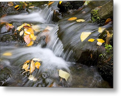 Fall Leaves In Rushing Water Metal Print by Craig Tuttle