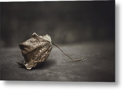 Fallen Leaf Metal Print by Scott Norris