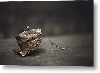 Fallen Leaf Metal Print by Scott Norris