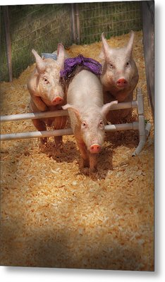 Farm - Pig - Getting Past Hurdles Metal Print by Mike Savad