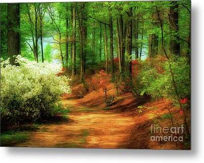 Favorite Path Metal Print by Lois Bryan