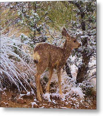 Fawn's First Snow Metal Print by Feva Fotos