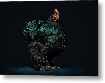 Feathers Metal Print by John Towner