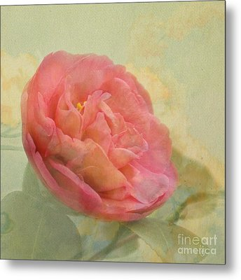 February Camellia Metal Print by Cindy Garber Iverson
