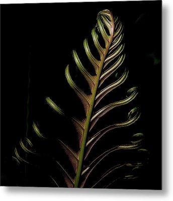 Fern In Green Metal Print by John Adams