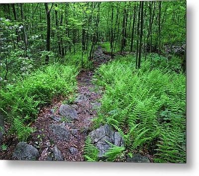 Ferns Above Lehigh Gap 3 Metal Print by Raymond Salani III
