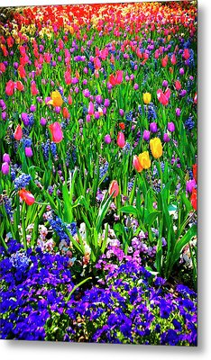 Field Of Flowers Metal Print by Tamyra Ayles