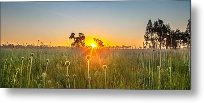 Fields Of Gold Panorama Metal Print by Az Jackson