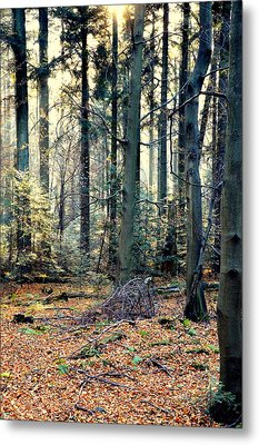 Fir Forest-2 Metal Print by Henryk Gorecki