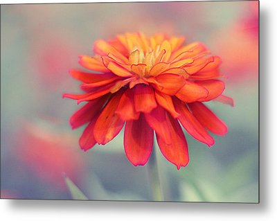 Fire And Ice Metal Print by Amy Tyler