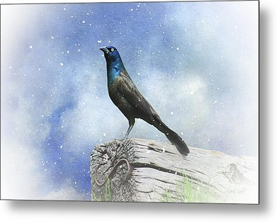 First Snow And Common Grackle Metal Print by Andrea Kollo