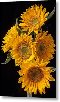 Five Sunflowers Metal Print by Garry Gay