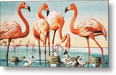 Flamingoes Metal Print by English School