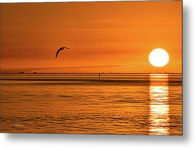 Flight At Sunset Metal Print by Christopher Holmes