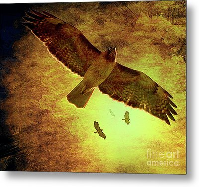 Flight Of The Golden Hawks . 7d5066 Metal Print by Wingsdomain Art and Photography