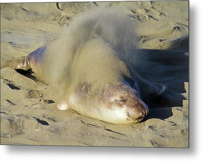 Flippin' Sand Metal Print by Donna Kennedy