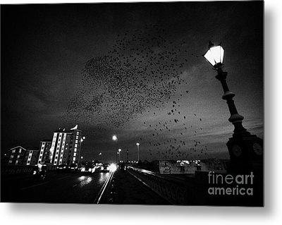 Flock Of Starlings Flying In Murmuration Over Lamp On Albert Bridge Belfast Northern Ireland Uk Metal Print by Joe Fox