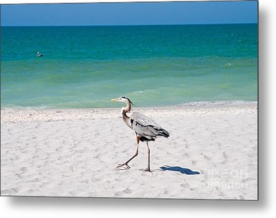 Florida Sanibel Island Summer Vacation Beach Wildlife Metal Print by ELITE IMAGE photography By Chad McDermott