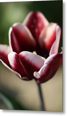 Flower In Color Metal Print by Kevin Cummings