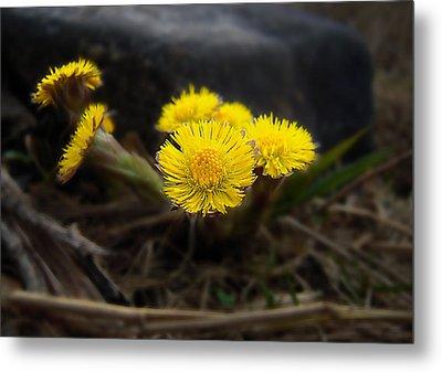 Flower Weed Metal Print by Svetlana Sewell
