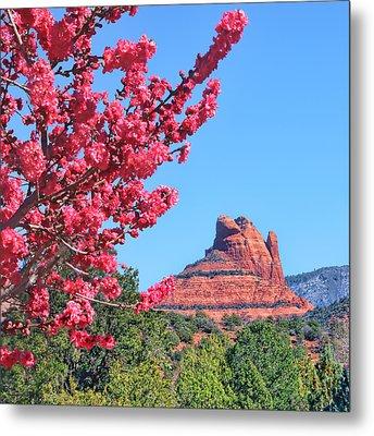 Flowering Tree - Sedona Red Rock Metal Print by Nikolyn McDonald
