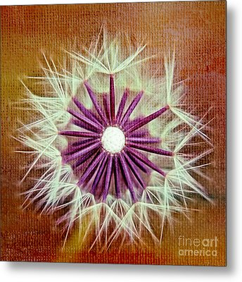 Fluffy Sun - S20b-t01sq Metal Print by Variance Collections