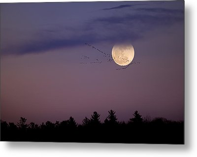 Fly By Night Metal Print by Bill Wakeley