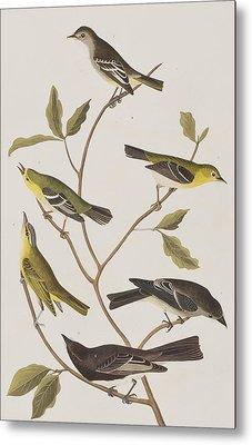 Fly Catchers Metal Print by John James Audubon