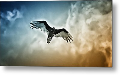 Flying Falcon Metal Print by Bill Cannon