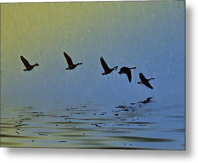Flying Low Metal Print by Bill Cannon