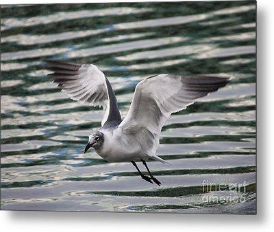 Flying Seagull Metal Print by Carol Groenen