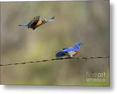 Flying To You Metal Print by Mike Dawson