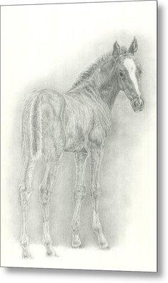 Foal Metal Print by Jennifer Nilsson