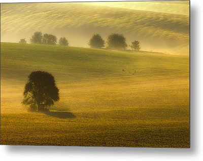 Foggy Fields Metal Print by Piotr Krol (bax)