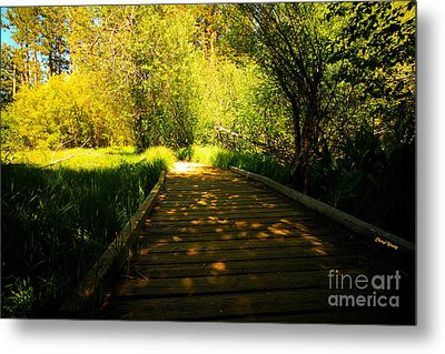 Follow The Path Metal Print by Cheryl Young