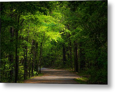 Forest Path Metal Print by Parker Cunningham