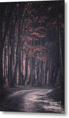 Forest Trail Metal Print by Carlos Caetano