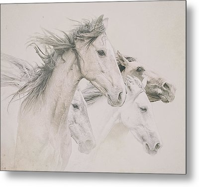 Four Horses Metal Print by Ron  McGinnis