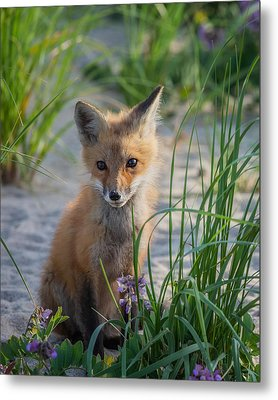 Fox Kit Metal Print by Bill Wakeley