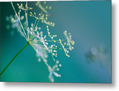 Fragile Dill Umbels Metal Print by Nailia Schwarz