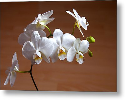Fragile Orchid  Metal Print by Svetlana Sewell