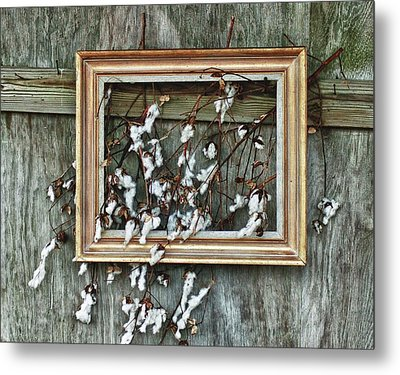 Framed Cotton Metal Print by Michael Thomas