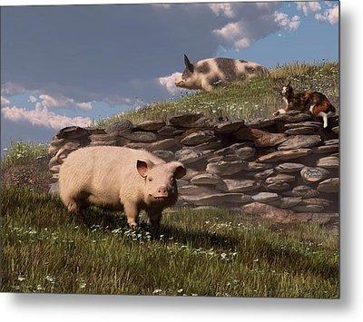 Free Range Pigs Metal Print by Daniel Eskridge