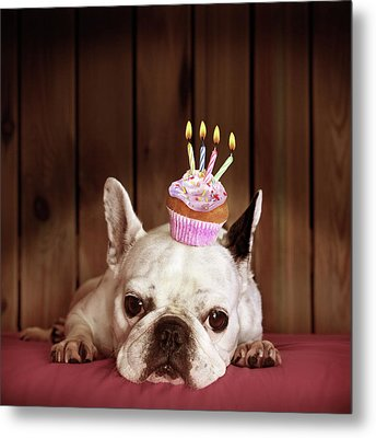 French Bulldog With Birthday Cupcake Metal Print by Retales Botijero