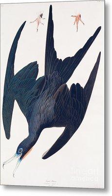 Frigate Penguin Metal Print by John James Audubon