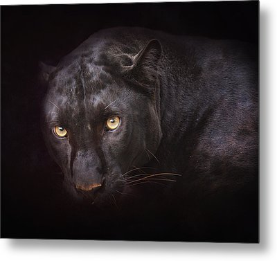 From Darkness Metal Print by Ron  McGinnis